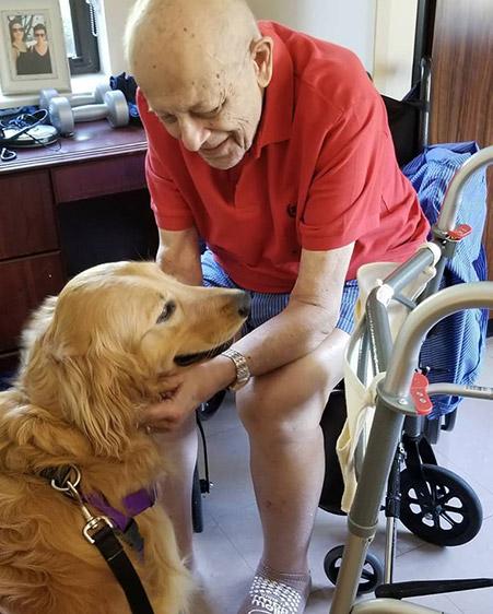 Elderly man with golden retriever service dog