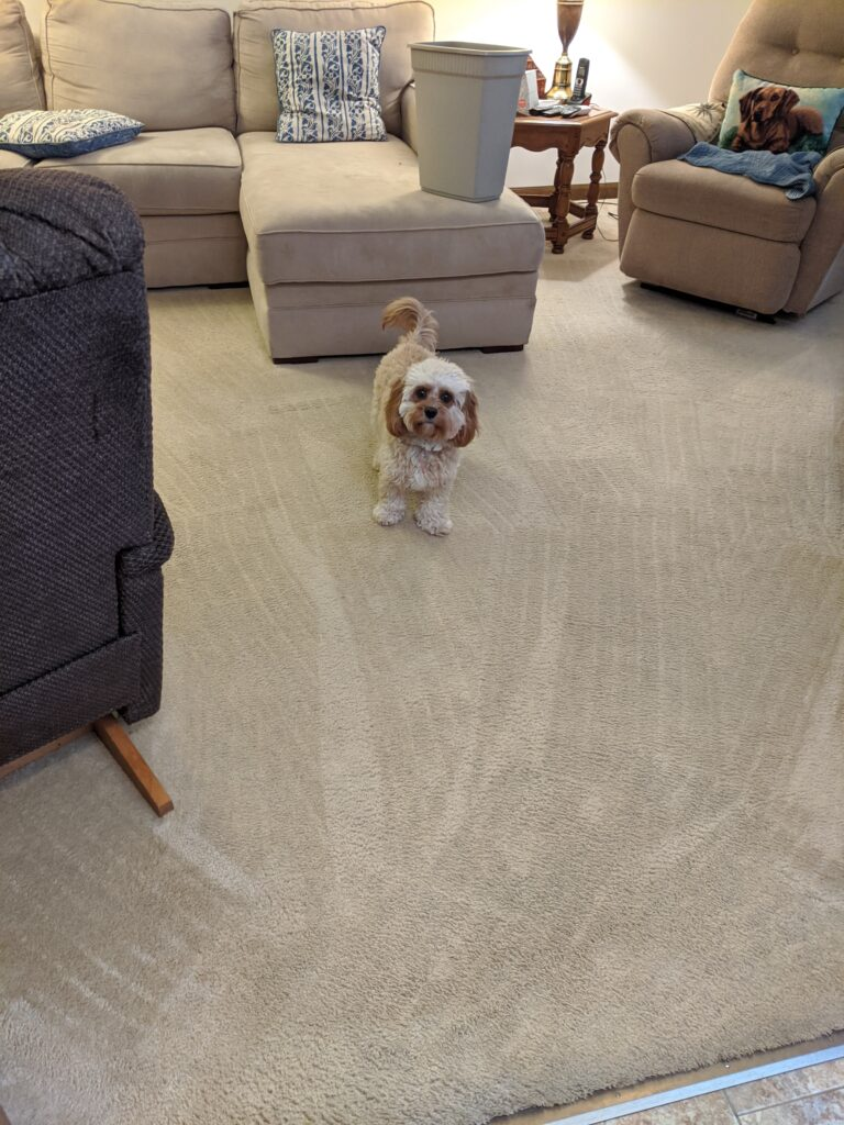 Pet Spots - After with Dog