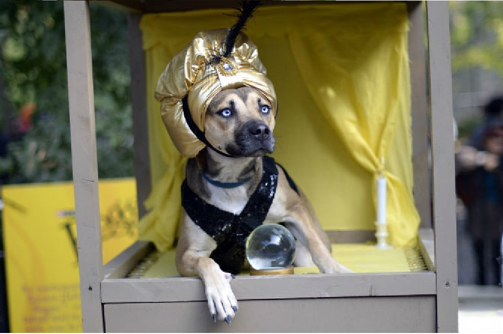 """A """"Dog Psychic"""" Warned Me That My House Was Haunted!"""