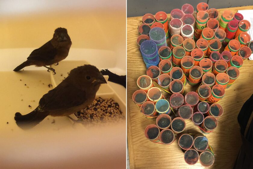 Man Arrested at JFK with 35 Birds Hidden in His Clothes!