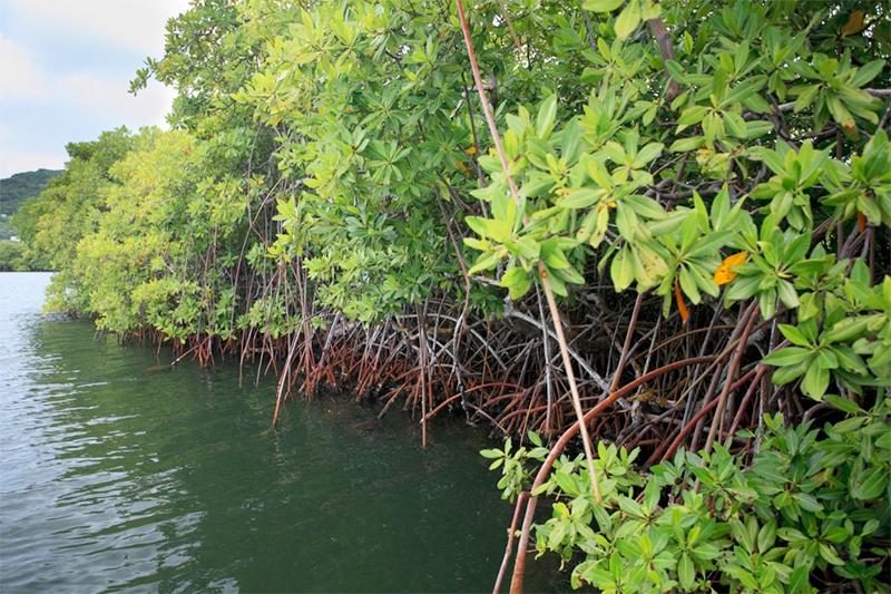 Governor Ron DeSantis Signs Bill Strengthening Florida's Natural Defenses