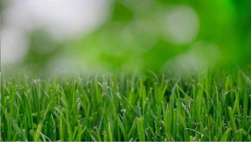Florida Man Receives Massive Fine for Unkempt  Lawn!
