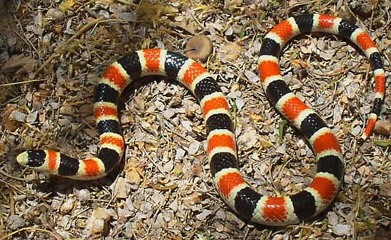 6 Most Dangerous Snakes in Florida