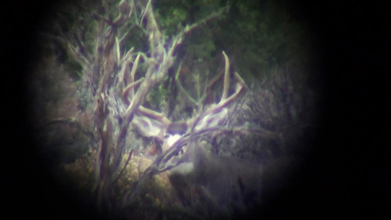 This Arizona Strip Mule Deer was broke and just not quite big enough.