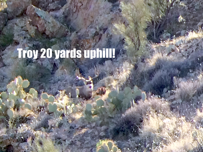 The big archery mule deer buck bedded as Troy waits for him to stand.