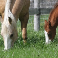 Horse and Foal at Flag Is Up Farms - photo by June Tabor Memories