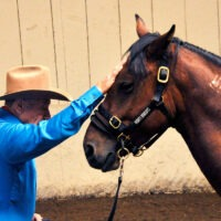 Monty Roberts Join-Up with a mustang