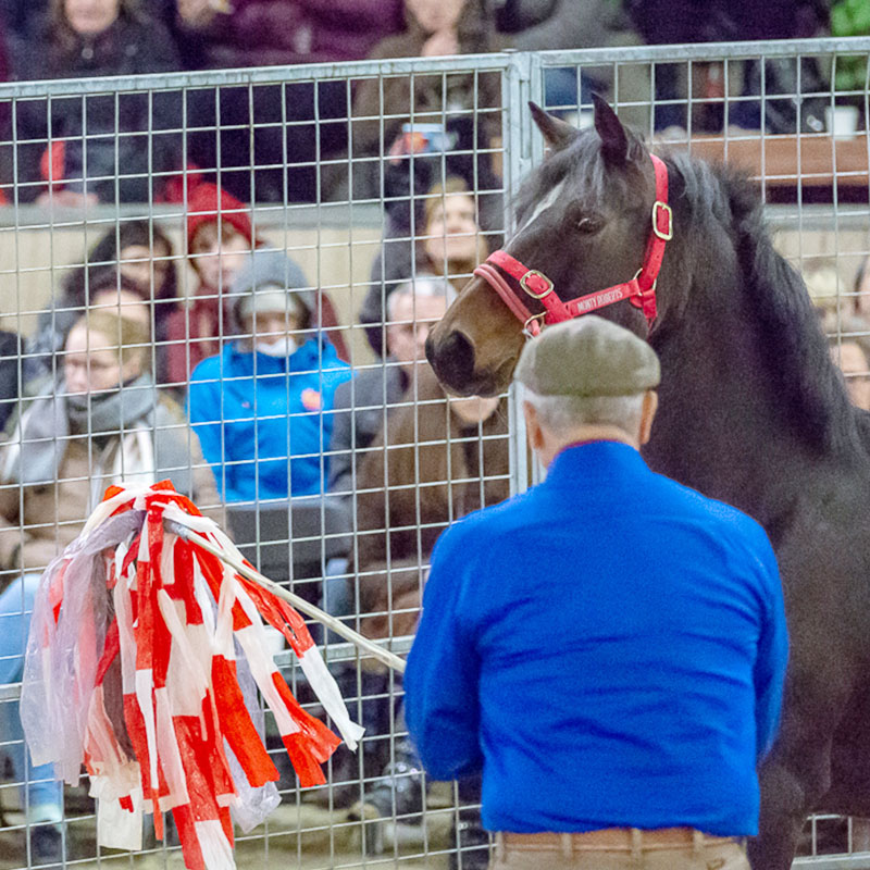 Monty Roberts Online University - desensitizing a spooky horse
