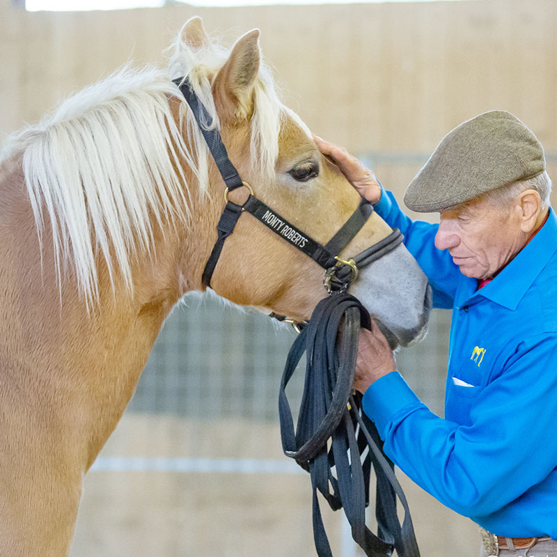 Monty Roberts Online University - building a willing partnership with your horse