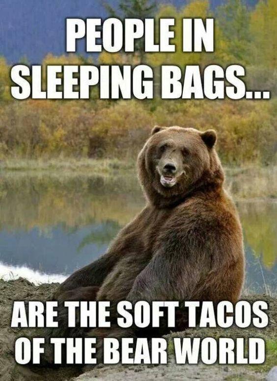 camping meme bear tacos