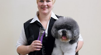 Achieving the Perfect Disguise on Curly Coated Mixed Breeds