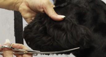 The American Cocker Spaniel Head Piece by Jodi Murphy