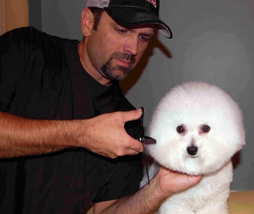 Styling the Bichon Frise Puppy - PetGroomer com Magazine