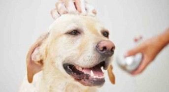 Grooming: The Ultimate Dog Experience
