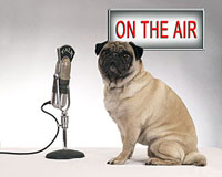 GroomerTALK Radio Archive and New Shows