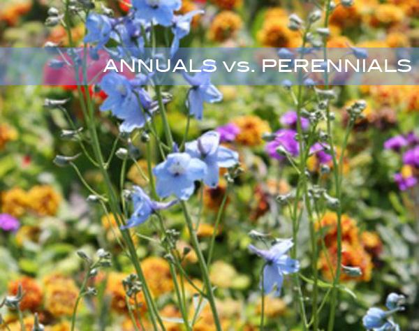 annuals vs perinnials