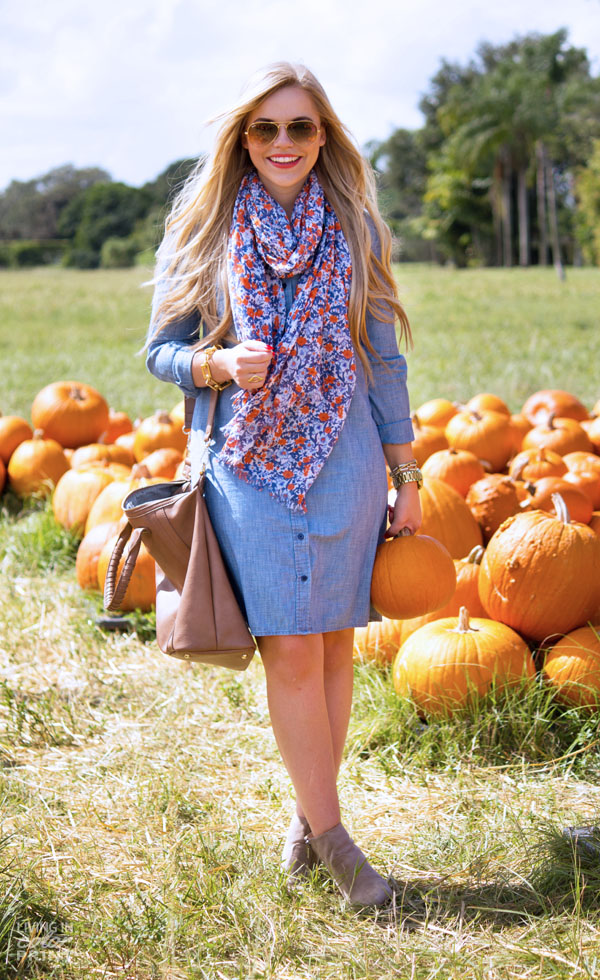 Pumpkin Patch   Living In Color Print