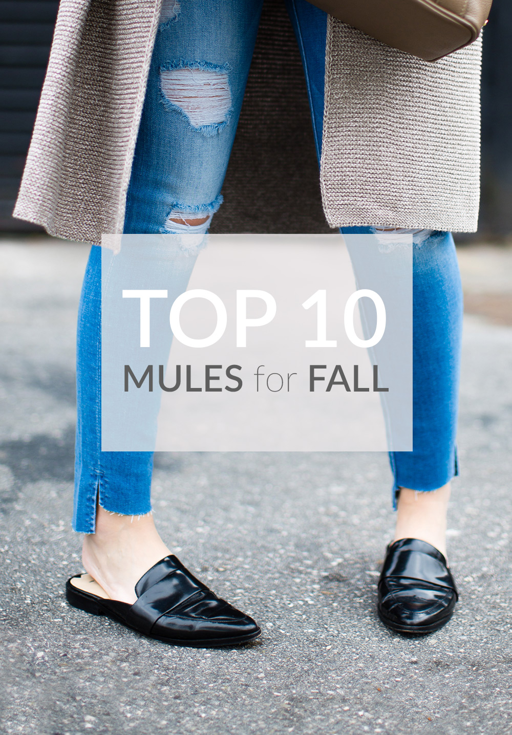 Mules for Fall