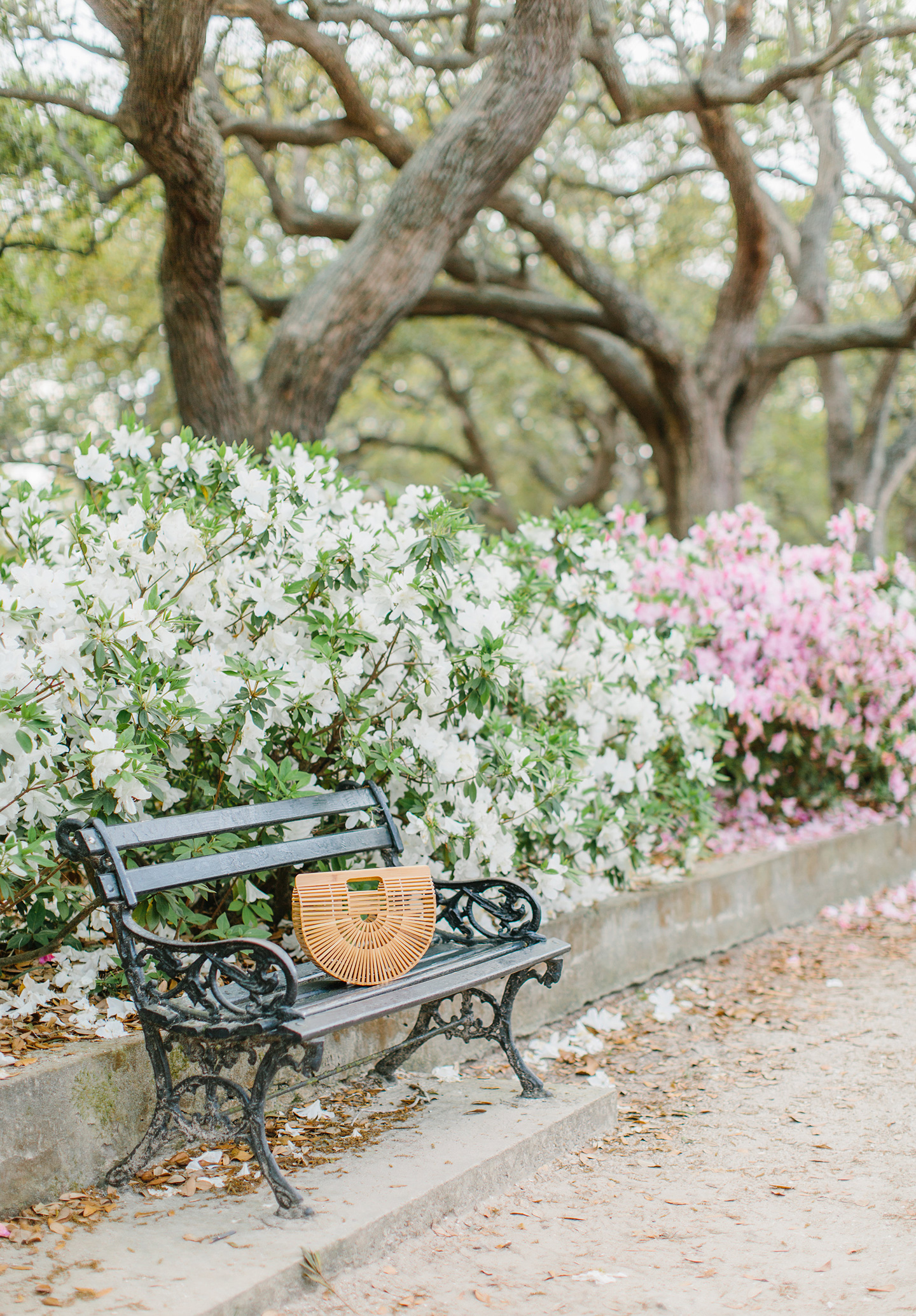 Charleston White Point Garden Azaleas