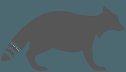 Raccoon Icon