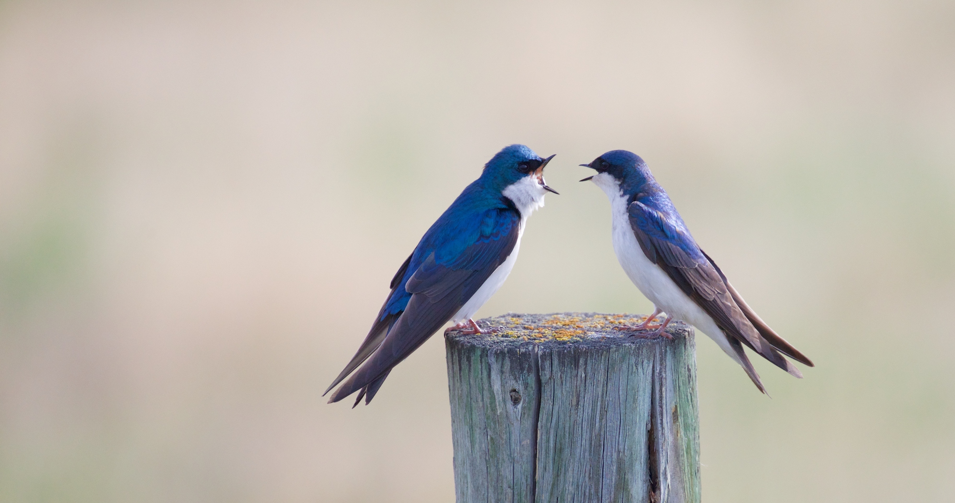 a couple of birds bickering