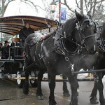 santaparadehorses