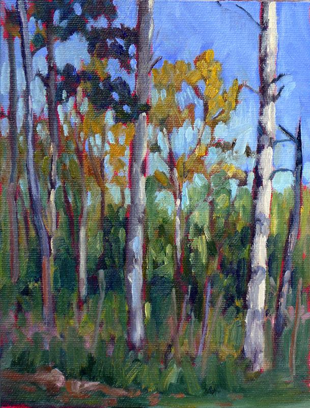 """""""Eastern Manitoba Forest,"""" Sandilands National Forest, Manitoba"""