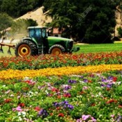 5378294-Tractor-in-field-of-fresh-colorful-flowers-Stock-Photo-machinery