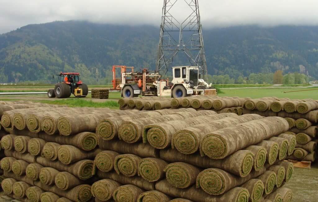 western turf farms - locally grown sod