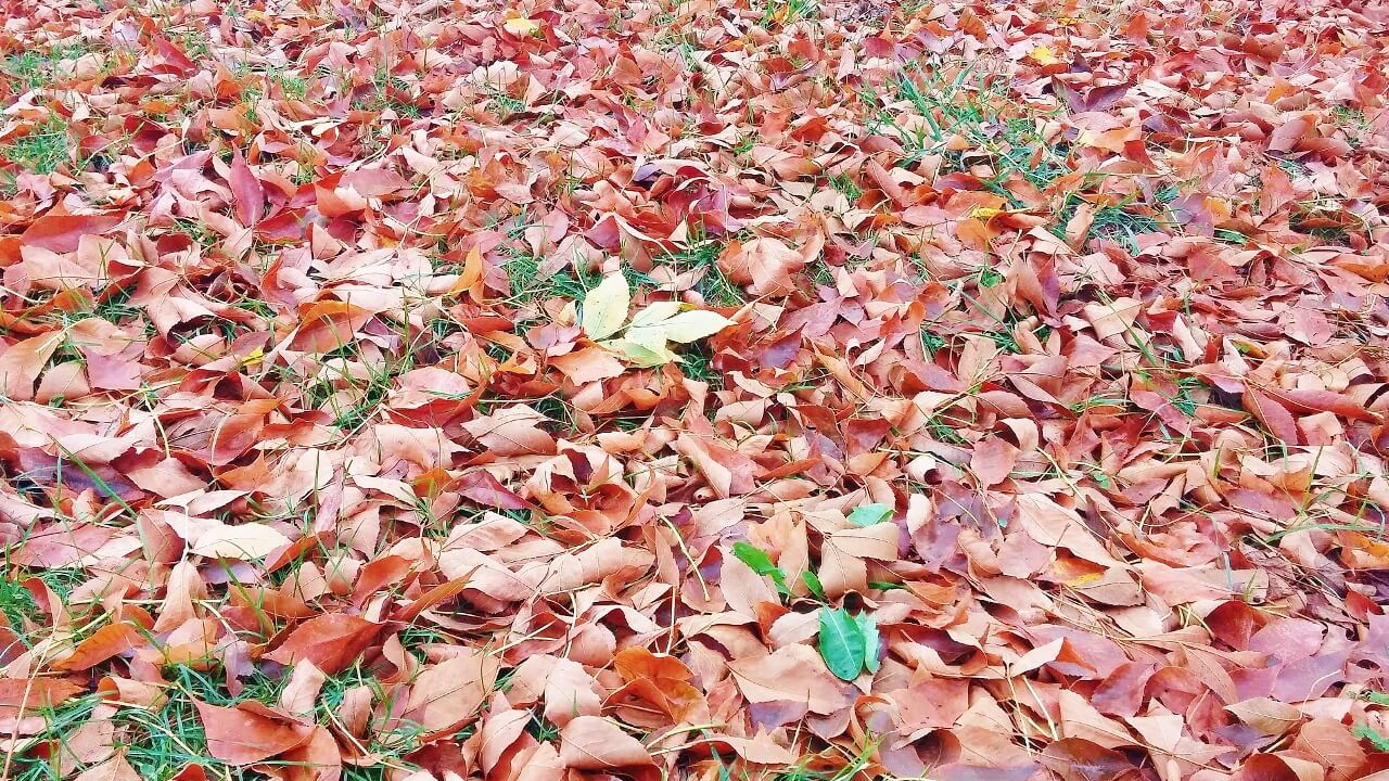 Fall Lawn Care for New Homeowners