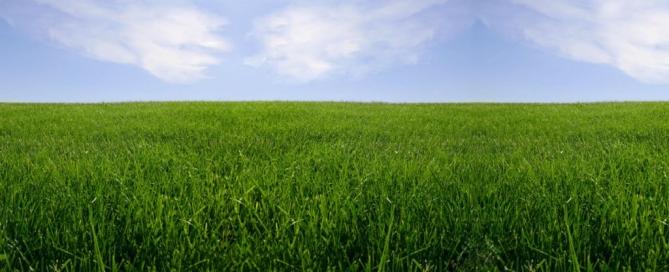 organic sod - beautiful green grass