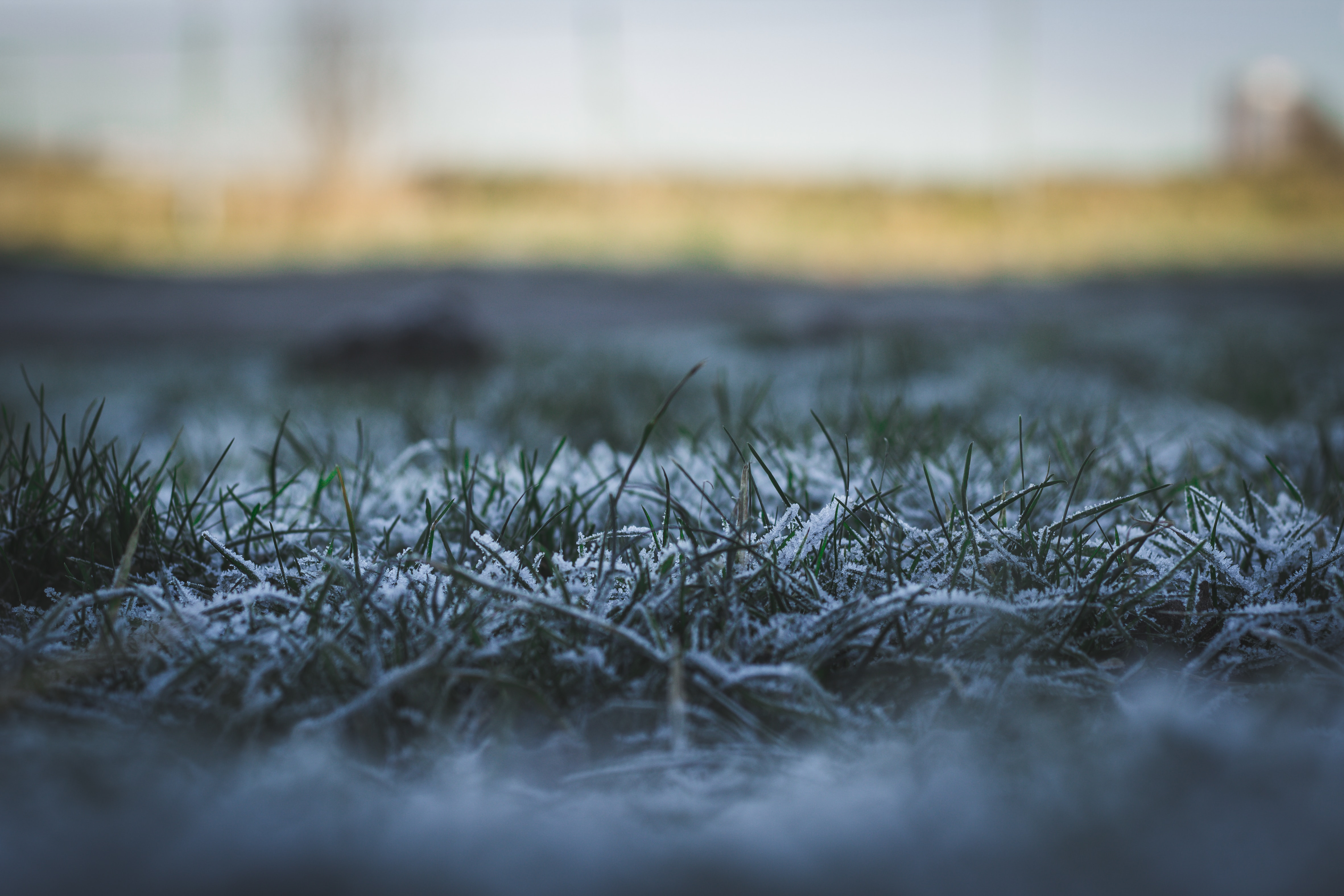 How To Prepare Your Turfgrass Lawn For The Winter