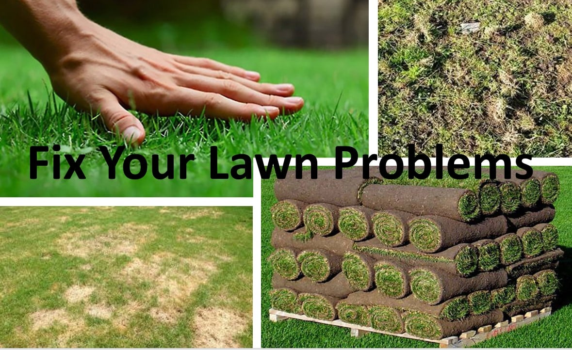 Let Us Fix Your Lawn Problems