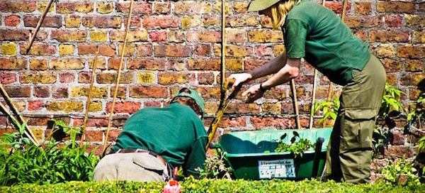 gardeners working - sod landscapers
