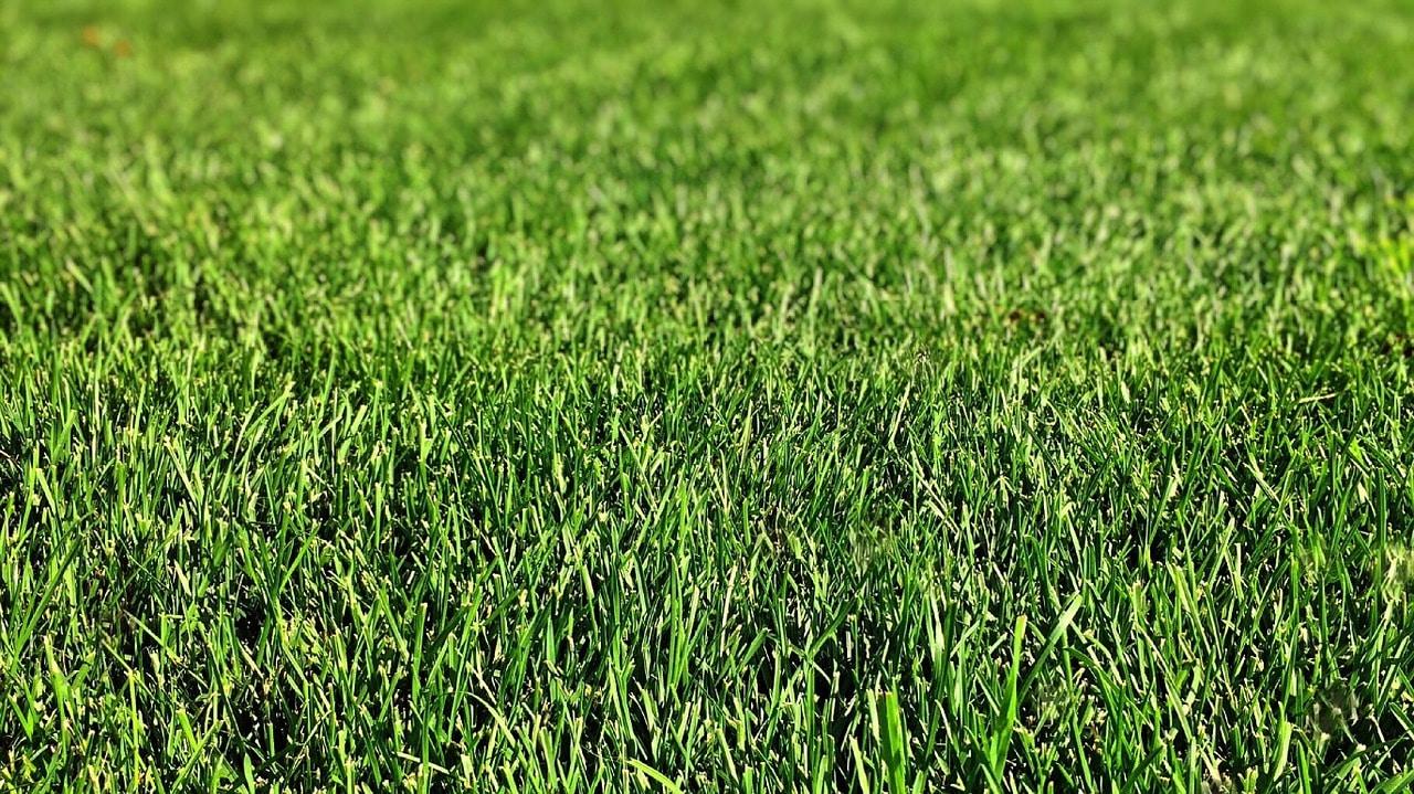 Lush, healthy grass