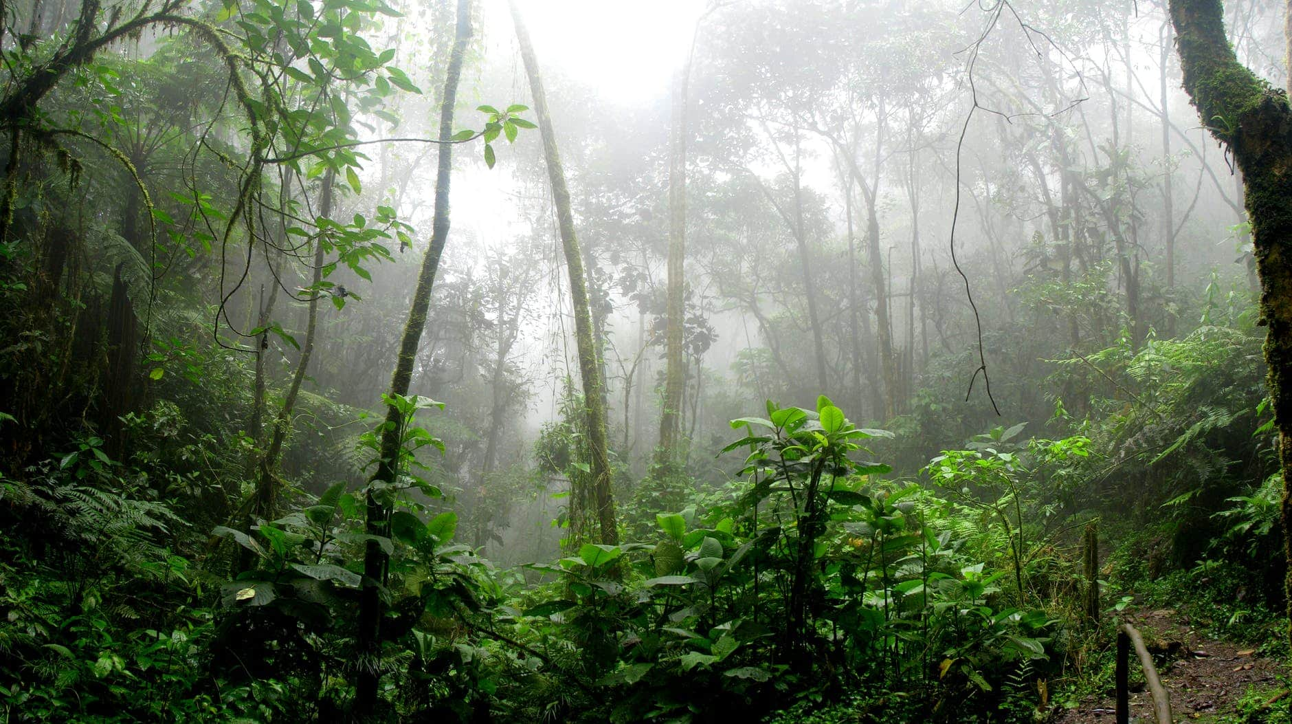 5 Ways You Can Help the Burning Amazon Rainforest in B.C.