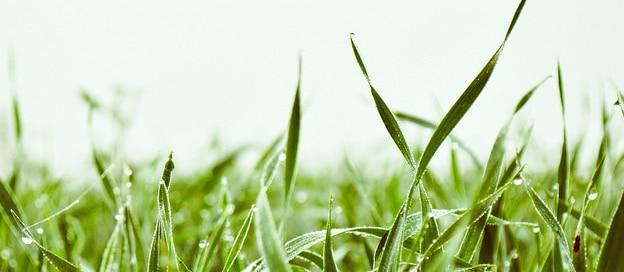 green grass - local sod farmers