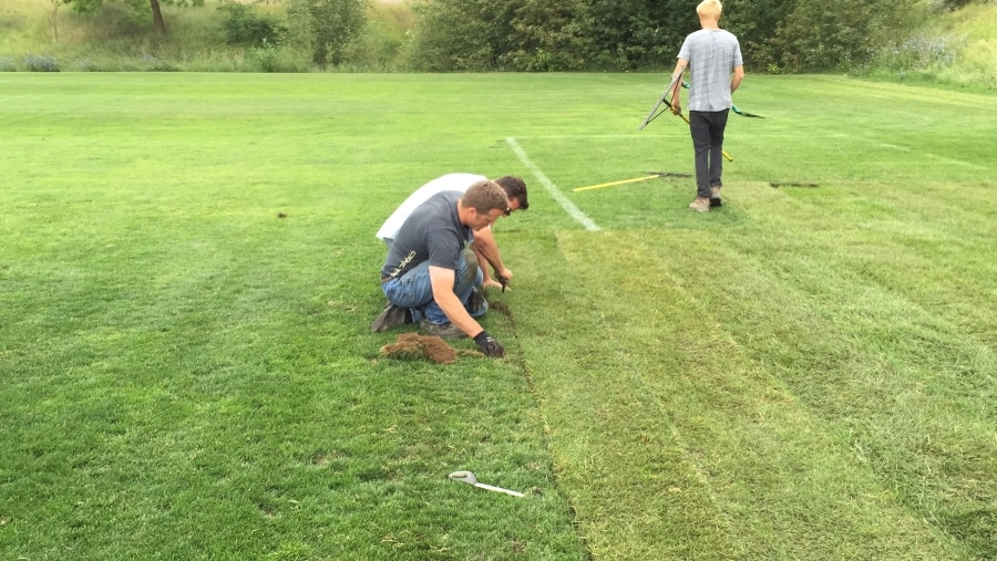 thick sod for public spaces in Alberta