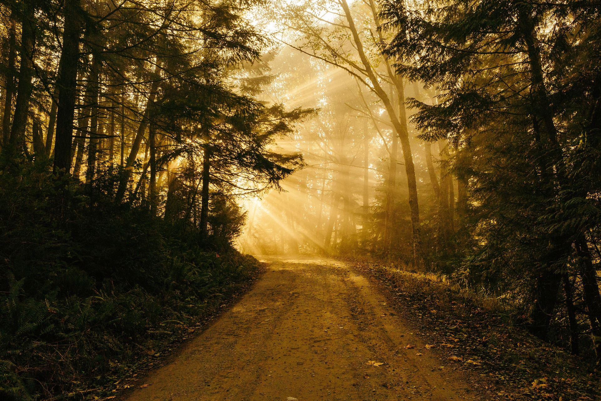 Living the Way of Love: Week 5 – Lenten Reflection: An Invitation to Be Light