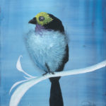 """Morning Delight"" Paradise Tanager oil on canvas 11 x 14"