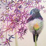 Costa's Hummingbird Color Pencil Original Artwork