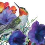 """Pointed Remark"", RubyThroat Hummingbird Prismacolor Original Artwork by Allison Richter"