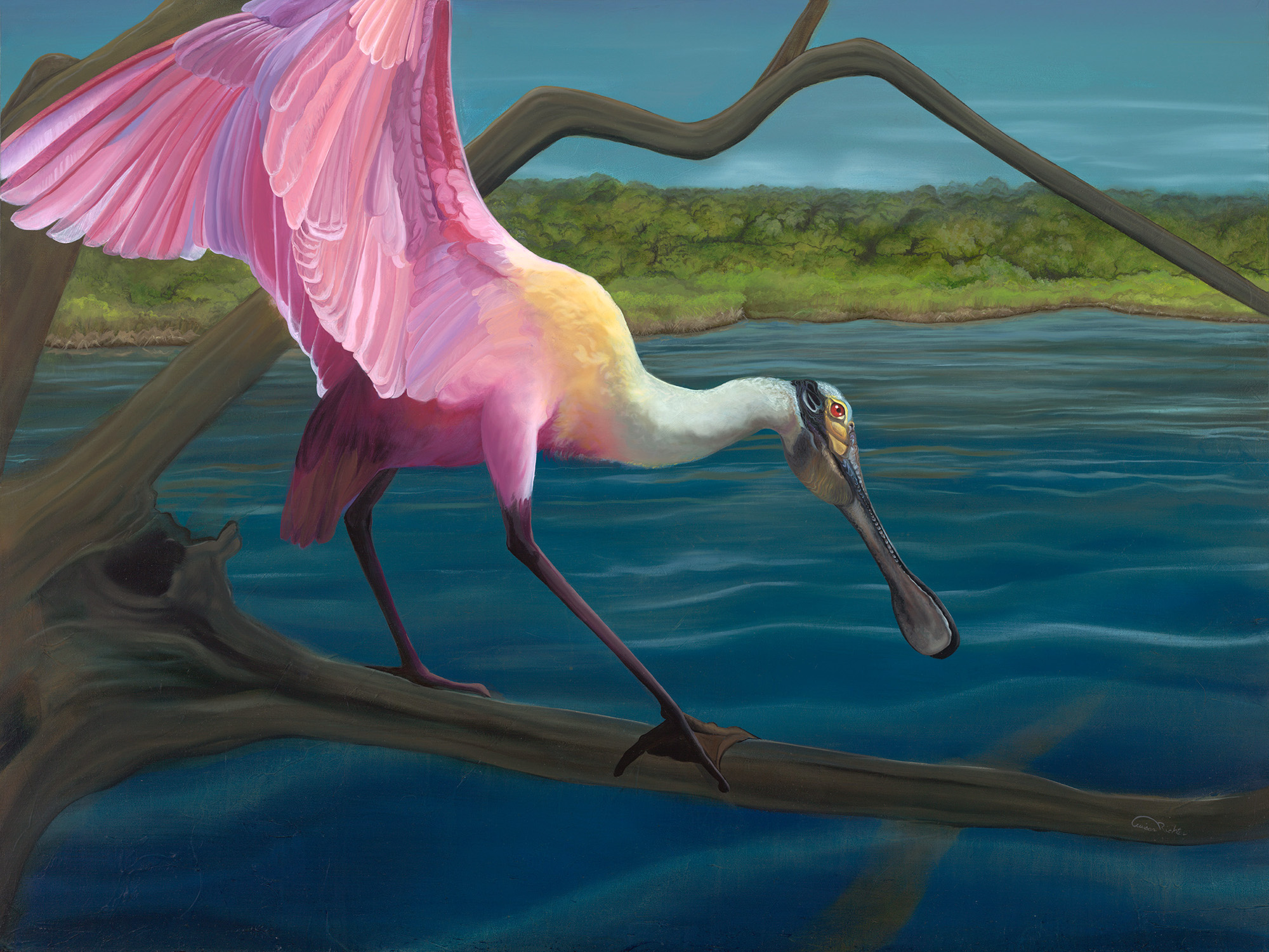 """""""Swagger"""" - Roseate Spoonbill lighting on a mangrove branch - an oil painting original artwork by professional artist Allison Richter"""