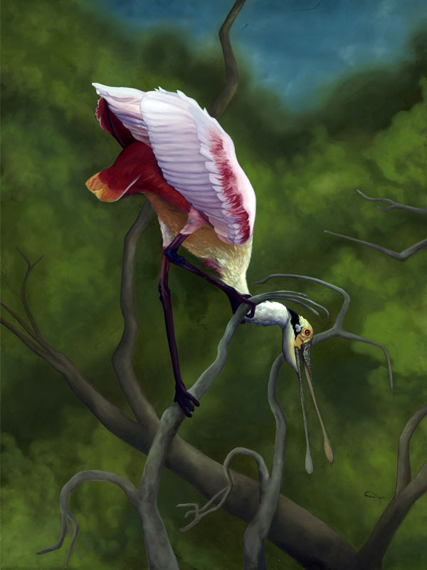 """Spoonbill Original Artwork Oil on Canvas """"Twisted Point of View"""""""