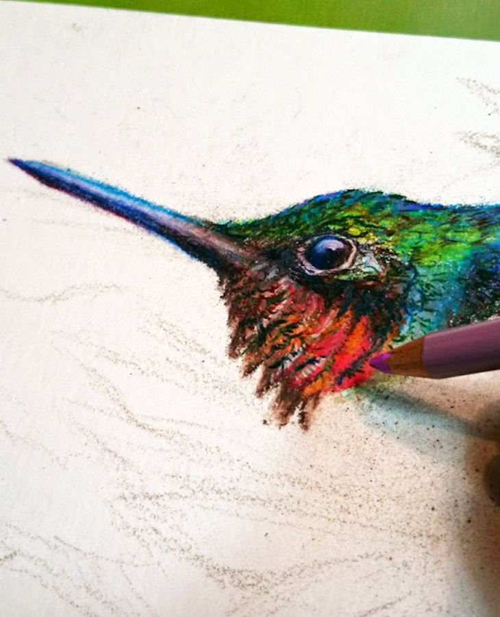 Ruby Throated Hummingbird Migration