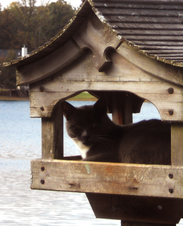Advice on keeping cats out of feeders