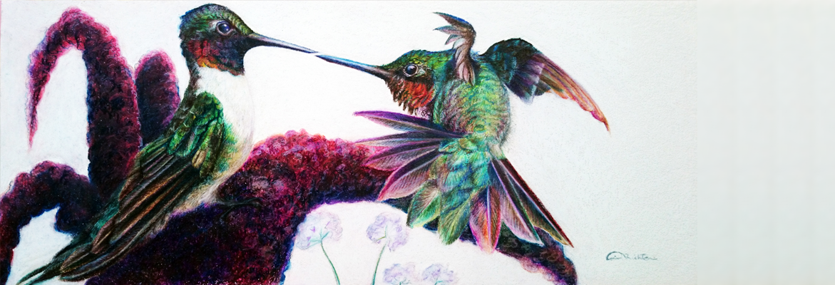 Feelin' Froggy Male Ruby Throat Hummingbirds Original Artwork by Allison Richter