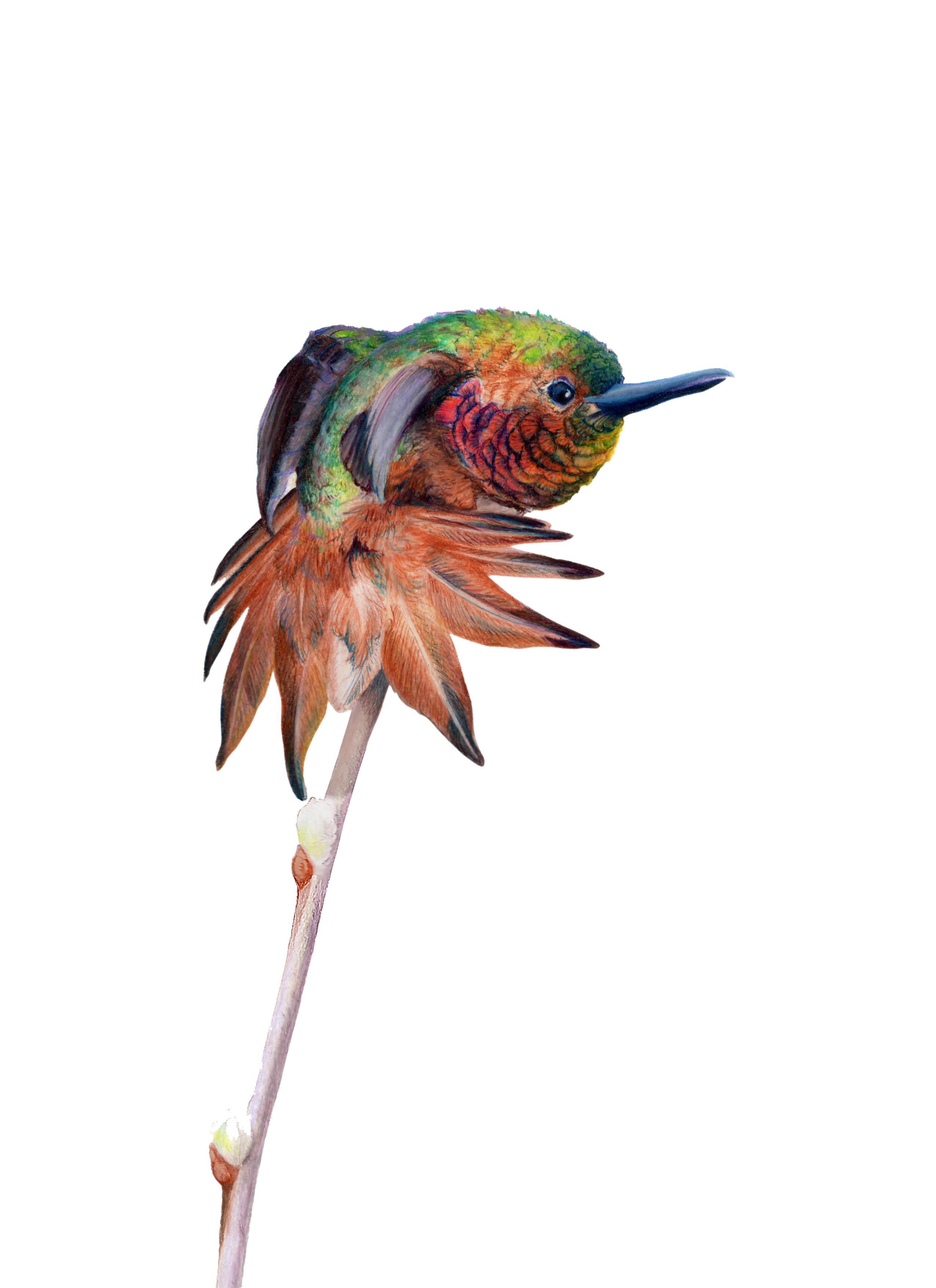 Fluff'n Stuff Rufus Hummingbird Original Artwork by Allison Richter