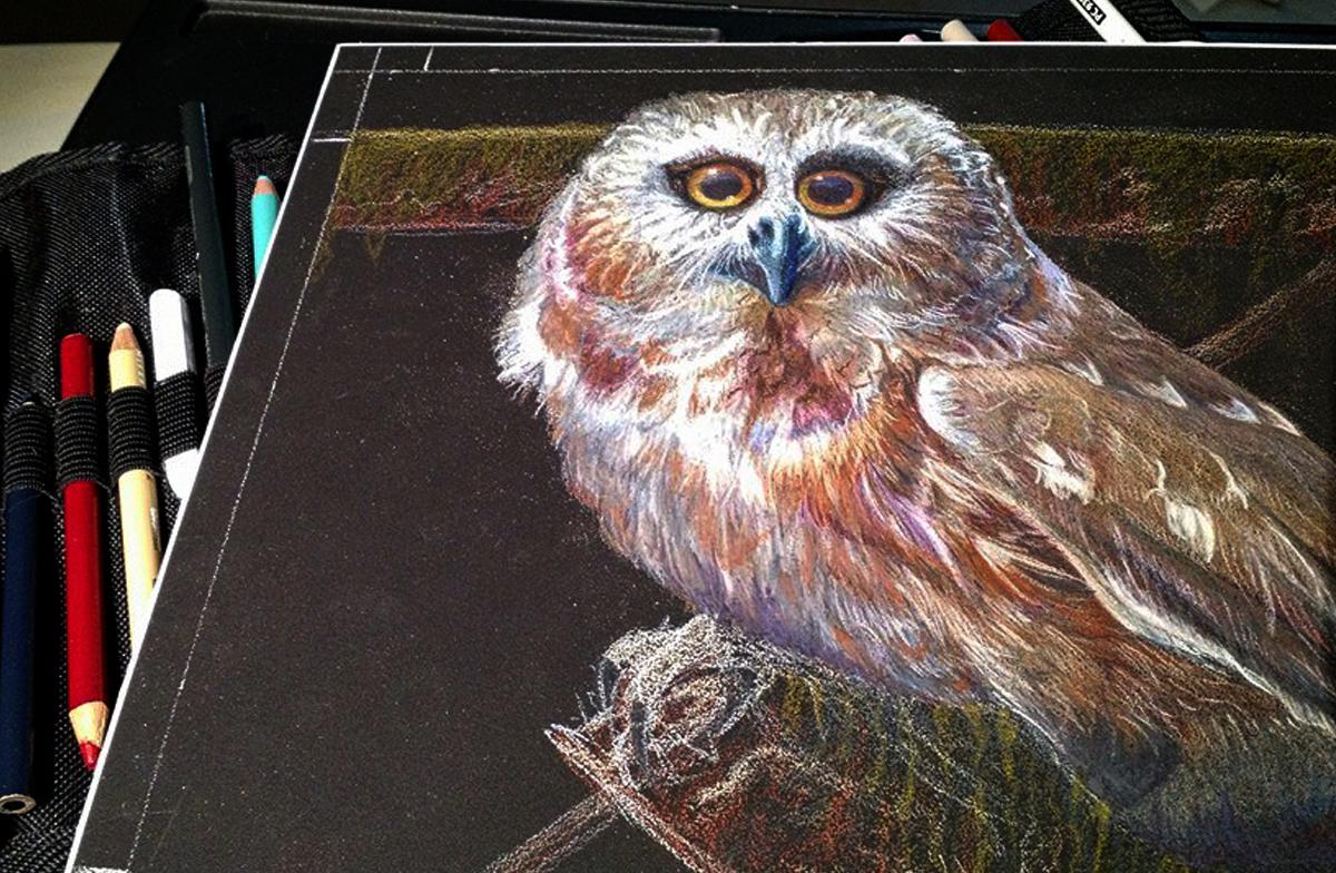 Saw-whet Owl Art Progress Allison Richter