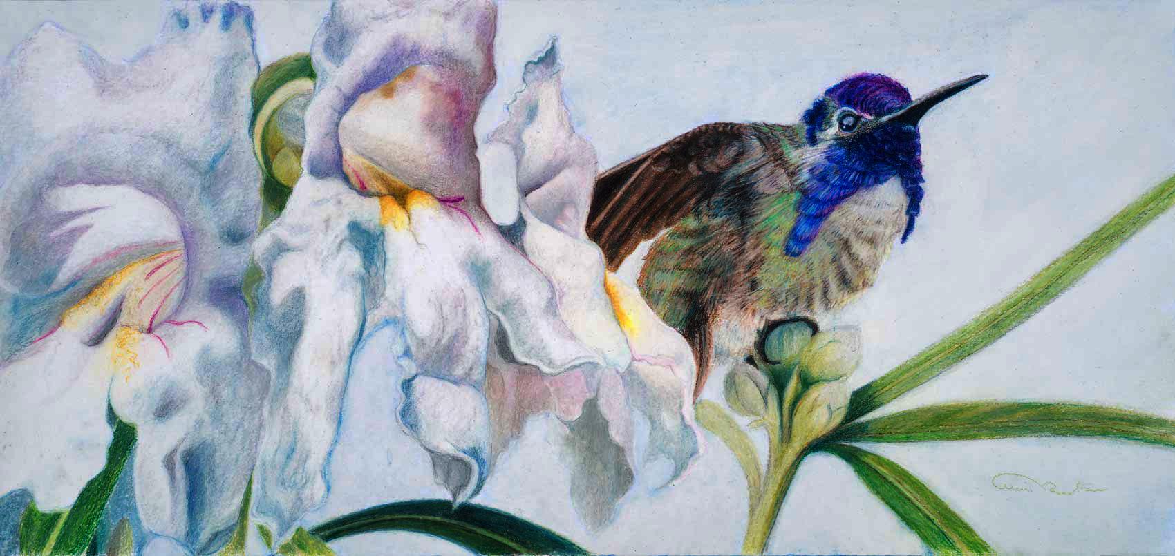 """""""Broken Amethyst"""" Original Prismacolor Artwork by Allison Richter"""